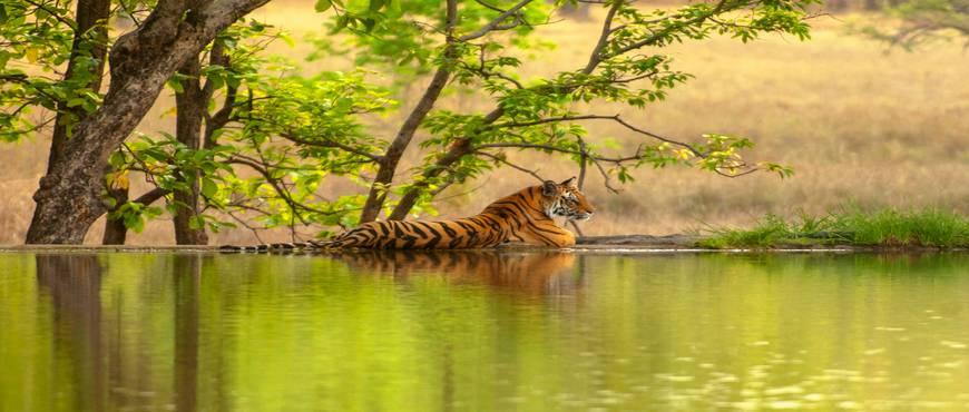 India del Norte: Vida Salvaje - Privado